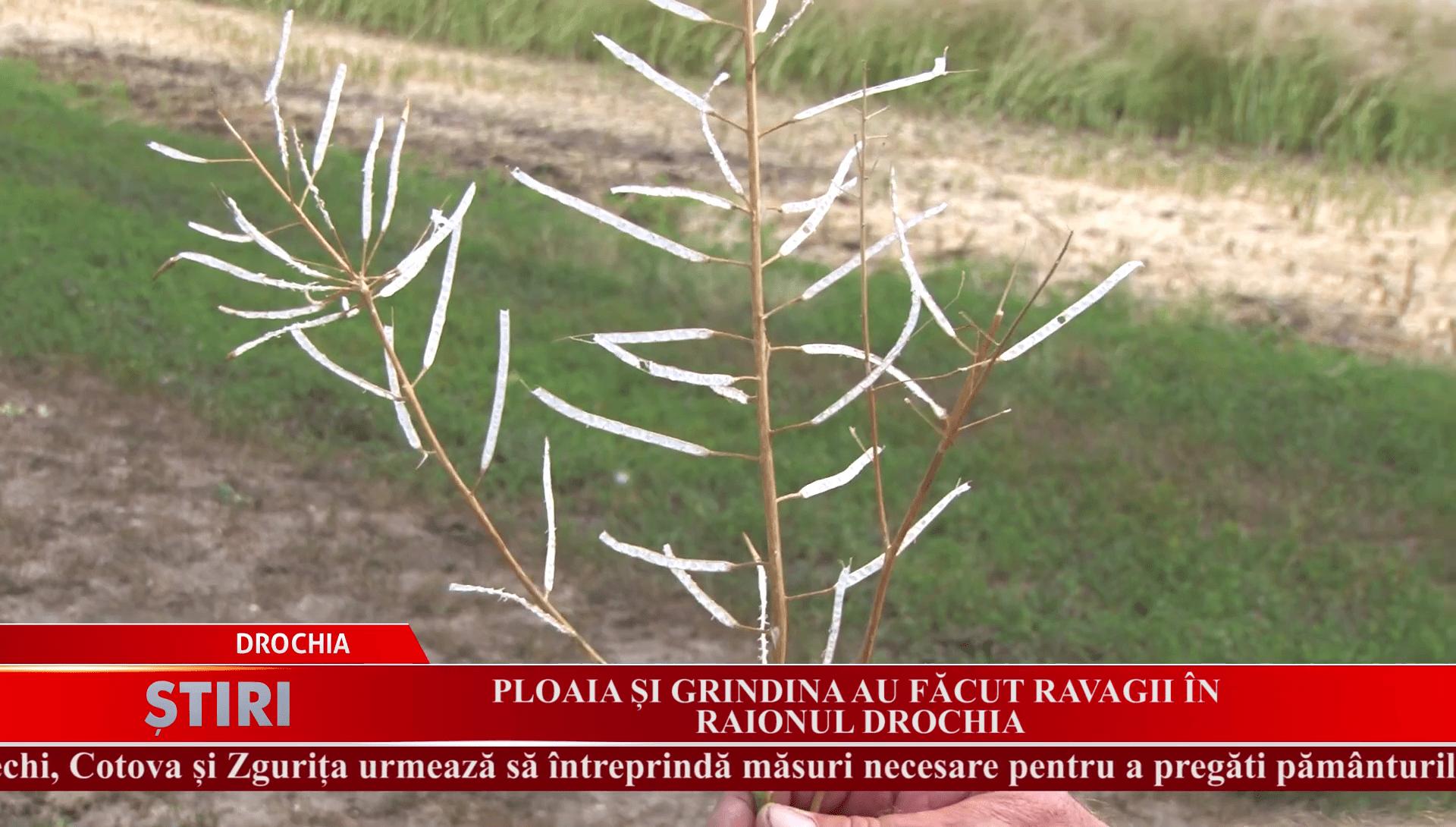 Ploaia și grindina au făcut ravagii în raionul Drochia