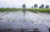 Pierderile suportate de producătorii agricoli urmare a calamităților naturale din acest an vor fi compensate